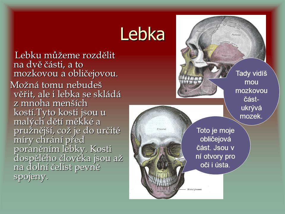 Lebka Lebku můžeme rozdělit na dvě části, a to mozkovou a obličejovou.