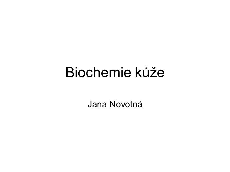 Biochemie kůže Jana Novotná