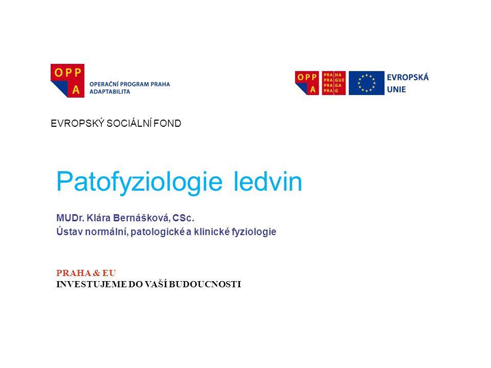 Patofyziologie ledvin
