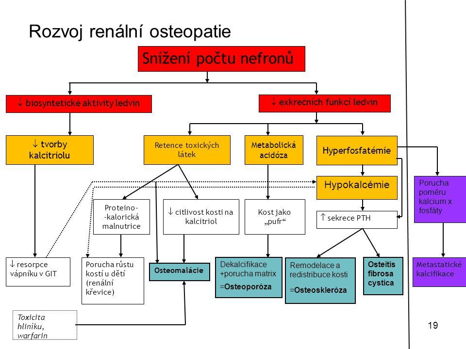 Rozvoj renální osteopatie