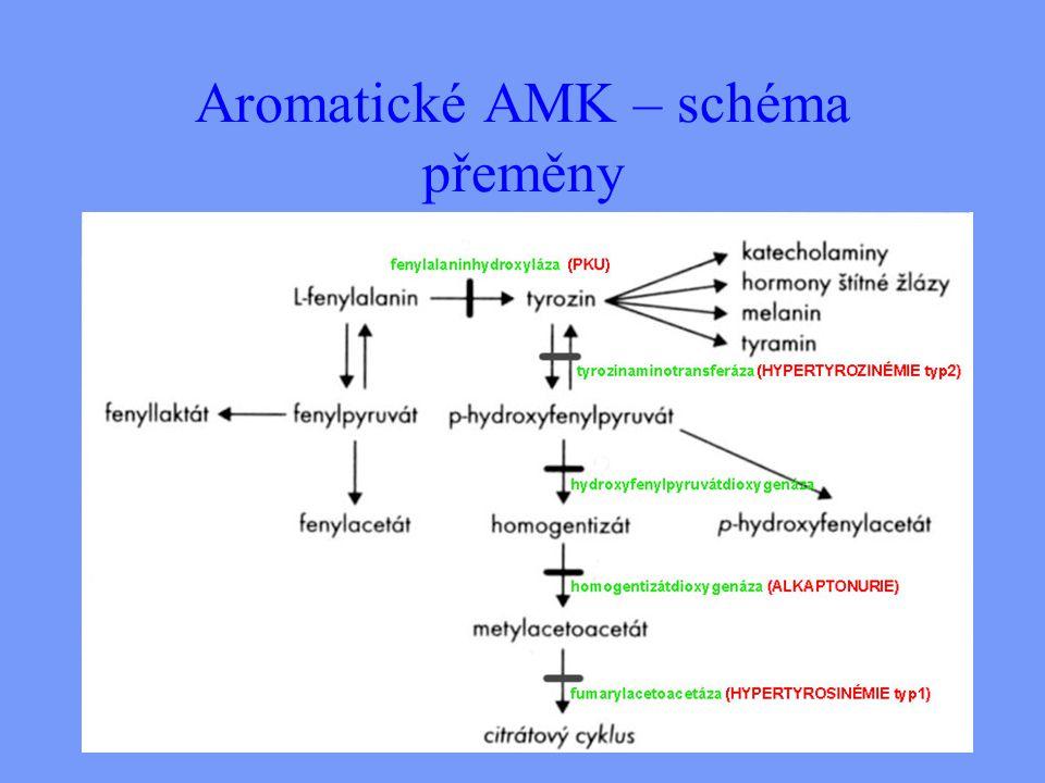 Aromatické AMK – schéma přeměny