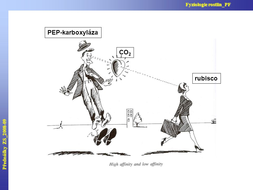 Přednášky ZS_2008-09 Fyziologie rostlin_PF PEP-karboxyláza CO2 rubisco