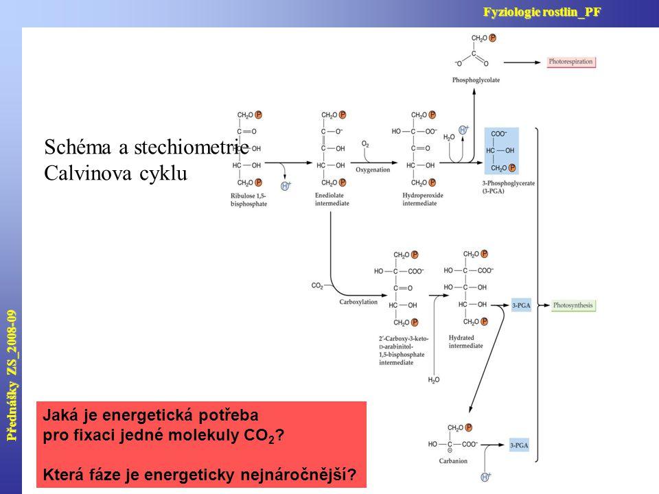 Schéma a stechiometrie Calvinova cyklu