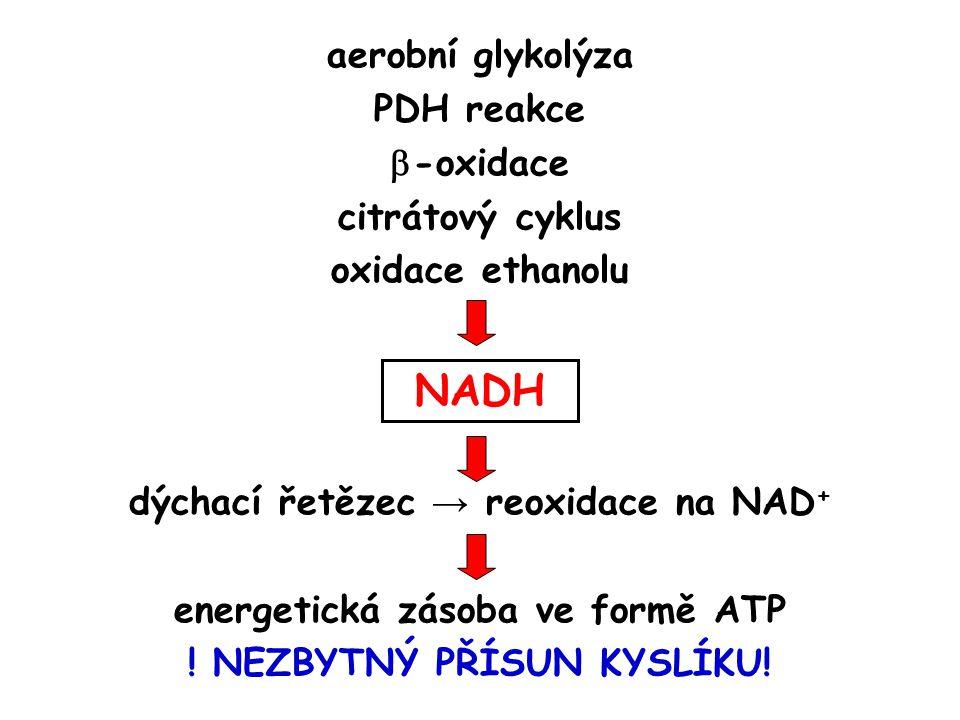 NADH aerobní glykolýza PDH reakce -oxidace citrátový cyklus