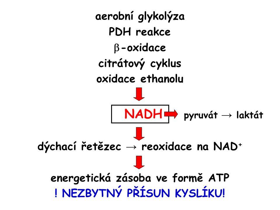 NADH pyruvát → laktát aerobní glykolýza PDH reakce -oxidace