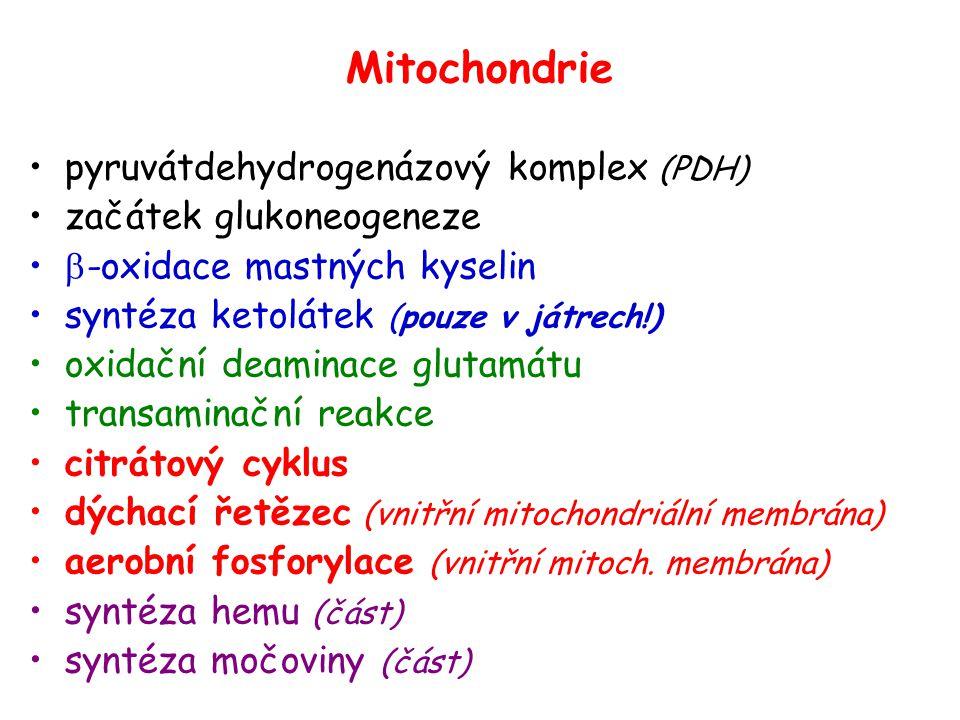 Mitochondrie pyruvátdehydrogenázový komplex (PDH)
