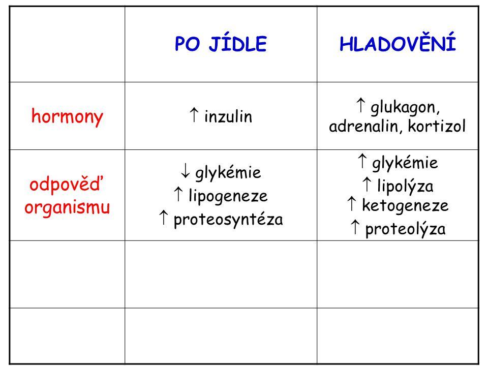PO JÍDLE HLADOVĚNÍ hormony odpověď organismu