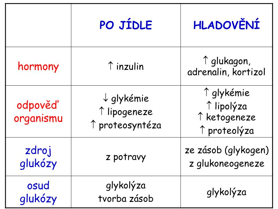PO JÍDLE HLADOVĚNÍ hormony odpověď organismu zdroj glukózy