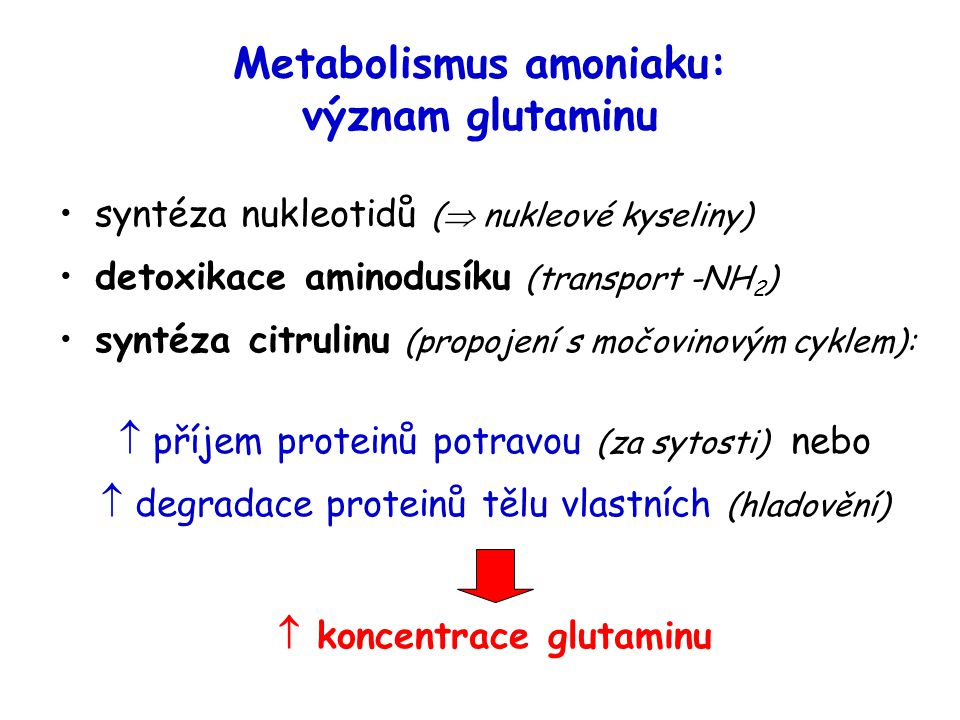 Metabolismus amoniaku: význam glutaminu