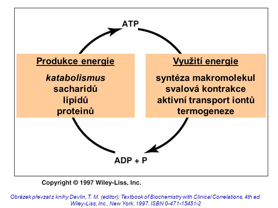 katabolismus sacharidů lipidů proteinů