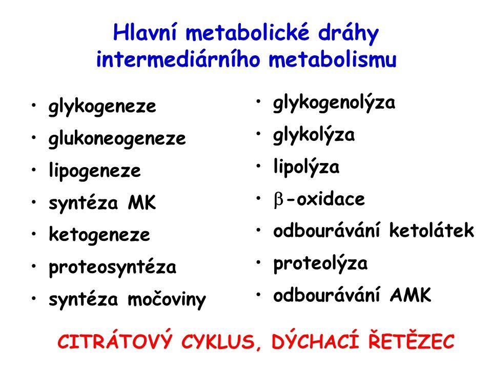 Hlavní metabolické dráhy intermediárního metabolismu