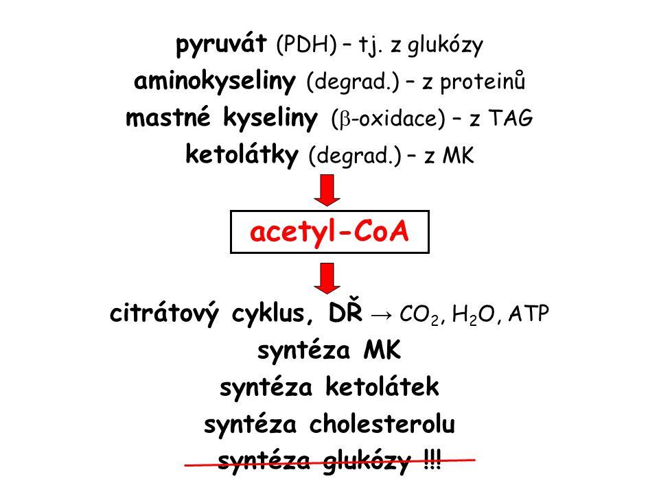 acetyl-CoA pyruvát (PDH) – tj. z glukózy