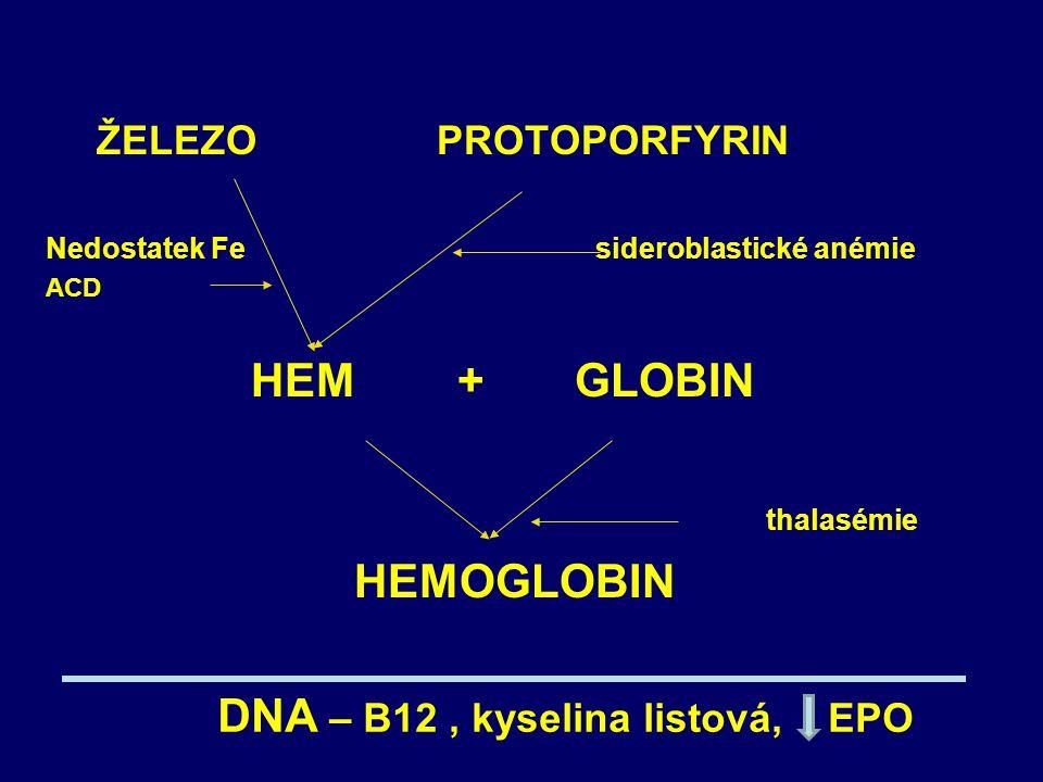 DNA – B12 , kyselina listová, EPO