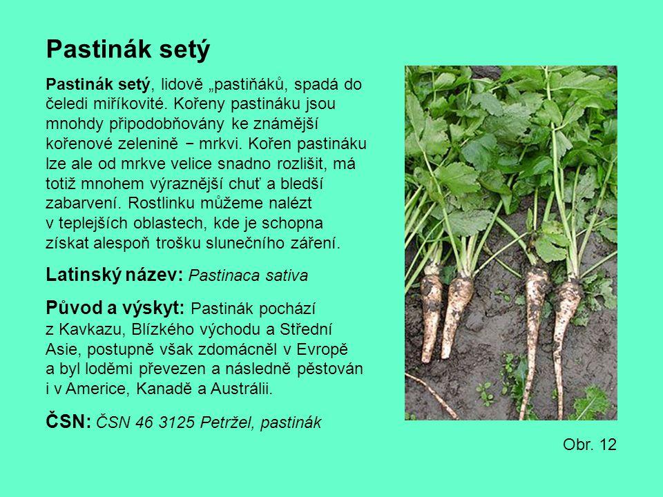 Pastinák setý Latinský název: Pastinaca sativa