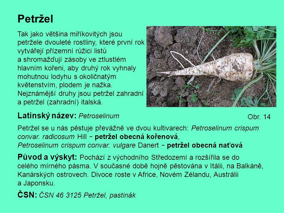 Petržel Latinský název: Petroselinum