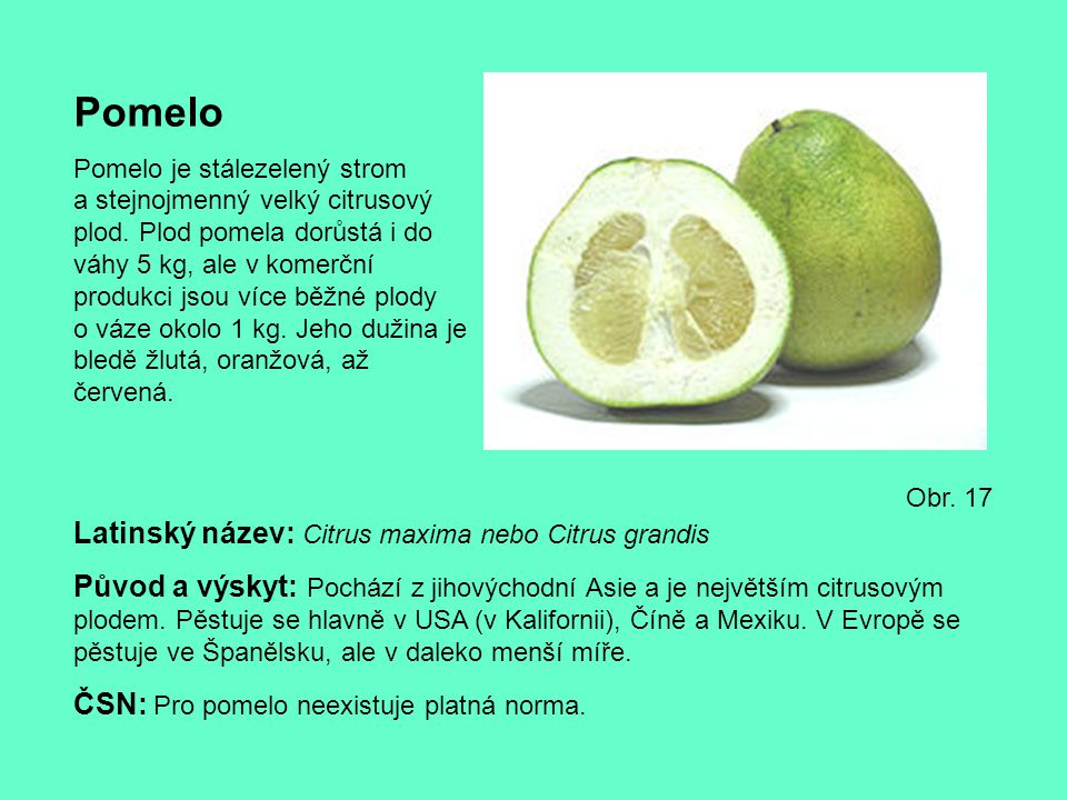Pomelo Latinský název: Citrus maxima nebo Citrus grandis