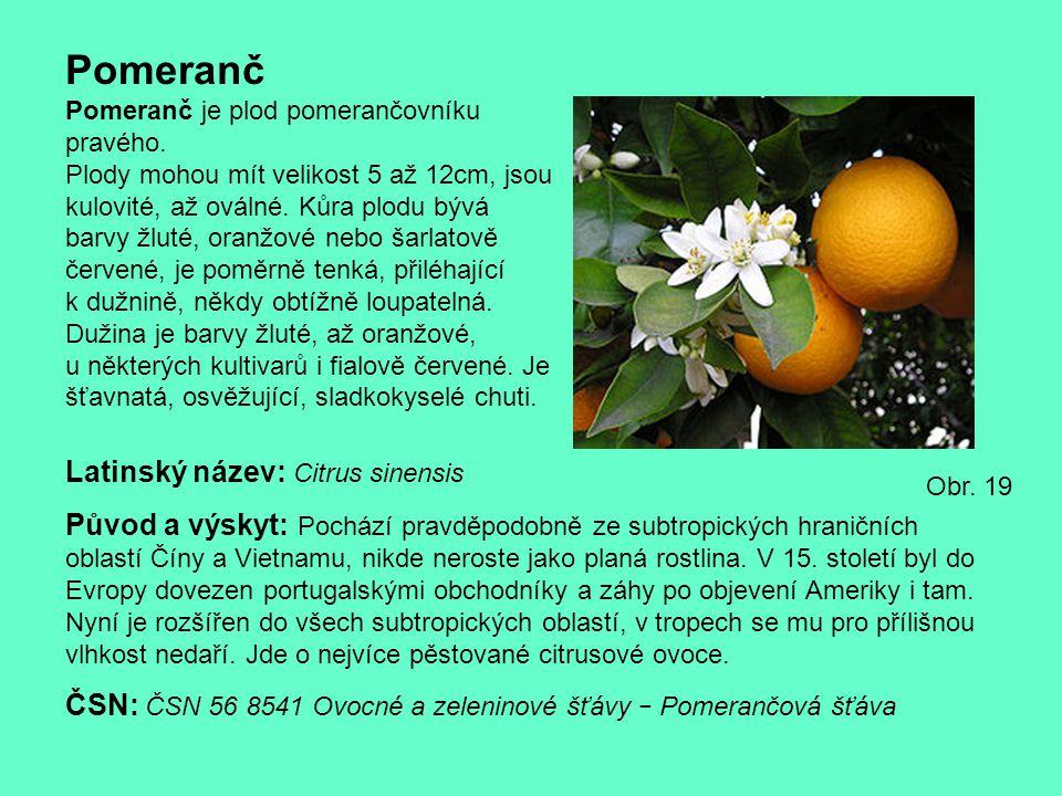 Pomeranč Latinský název: Citrus sinensis