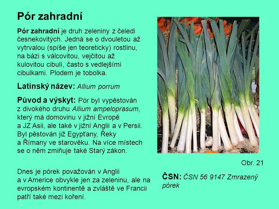 Pór zahradní Latinský název: Allium porrum