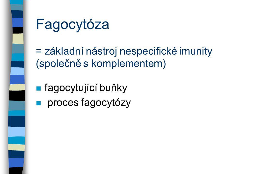 Fagocytóza = základní nástroj nespecifické imunity (společně s komplementem)