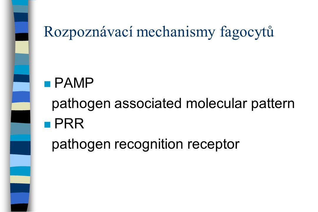 Rozpoznávací mechanismy fagocytů