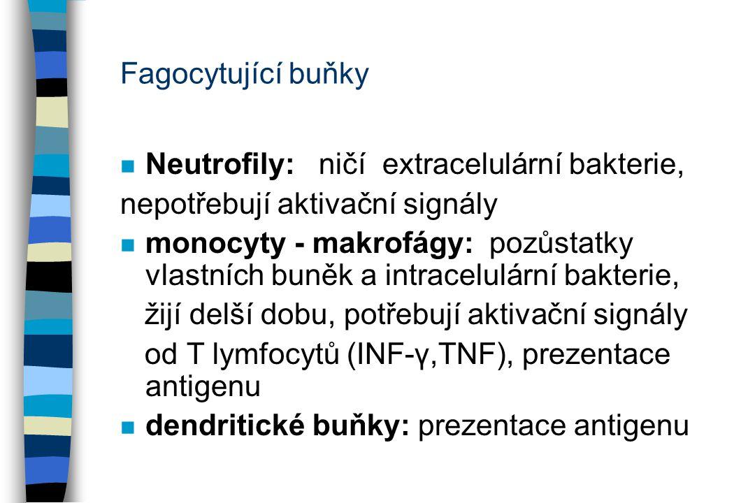 Fagocytující buňky Neutrofily: ničí extracelulární bakterie, nepotřebují aktivační signály.