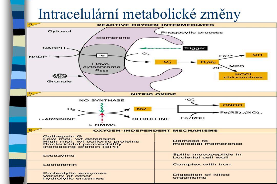 Intracelulární metabolické změny