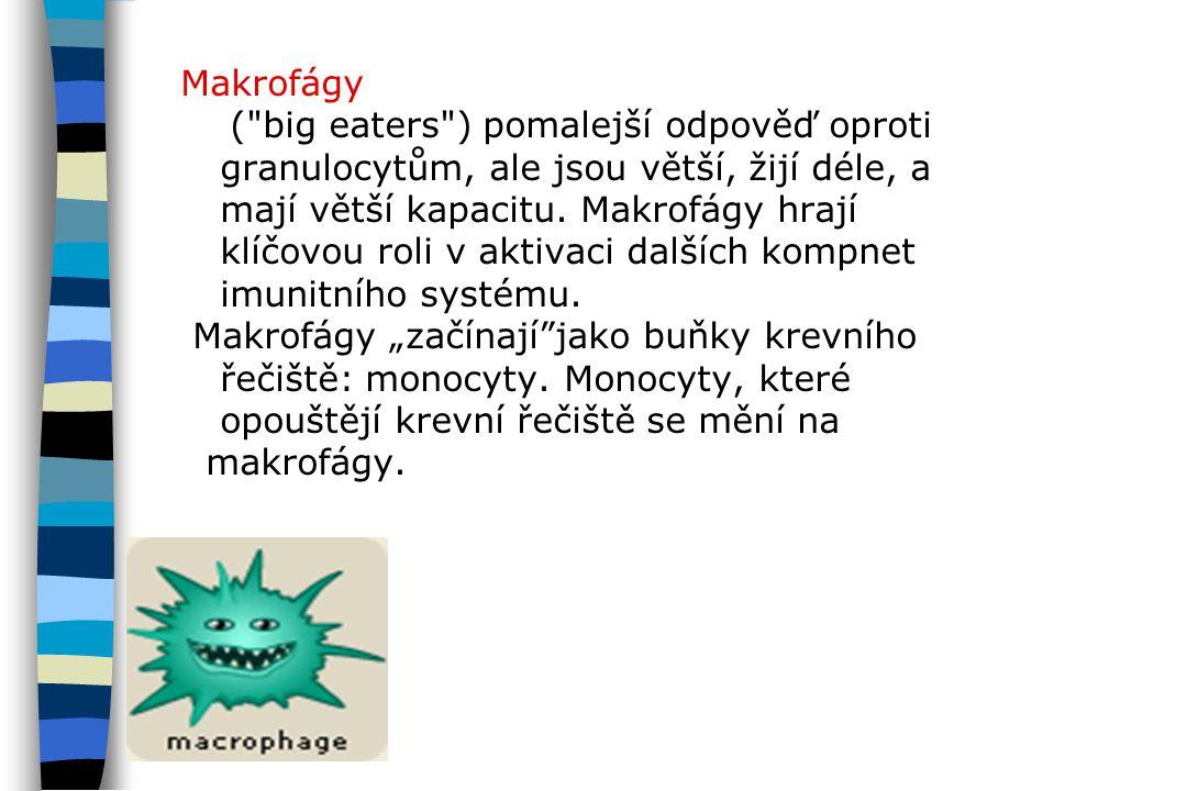 Makrofágy