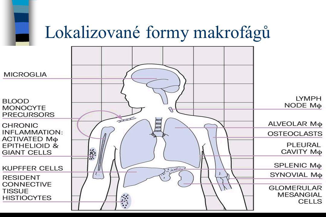 Lokalizované formy makrofágů
