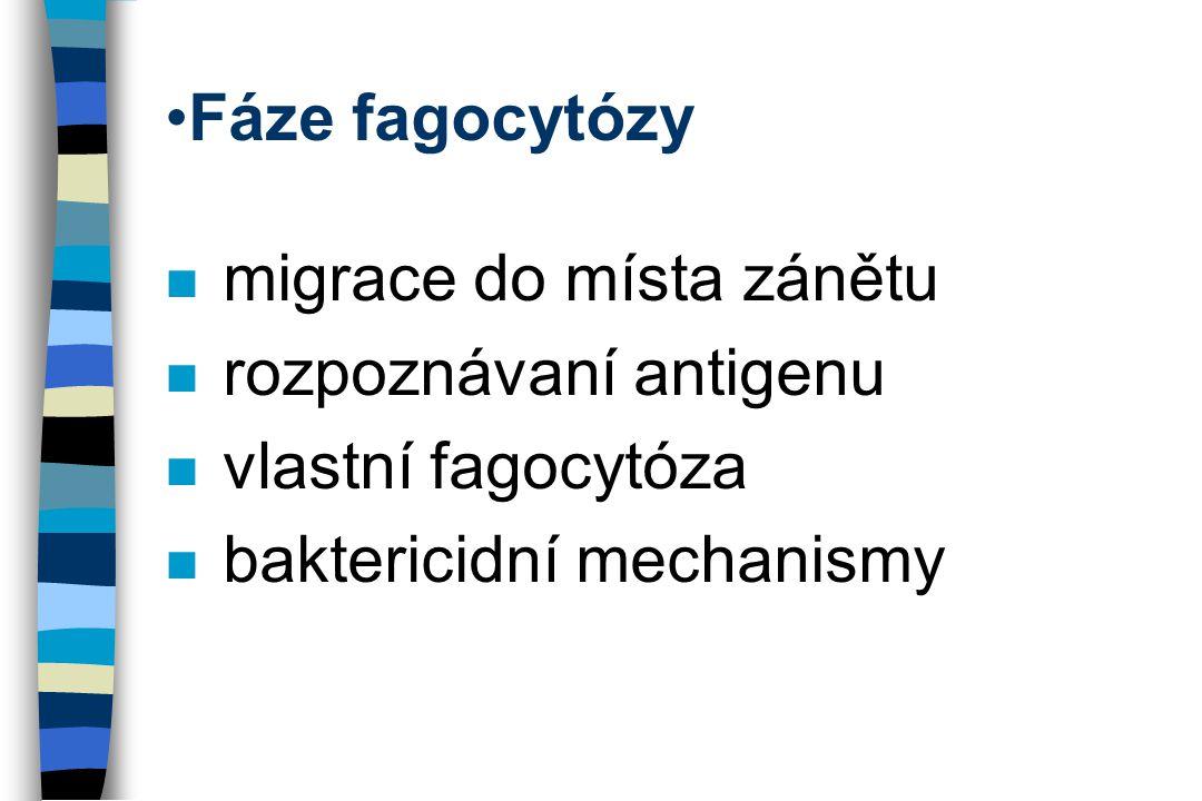 Fáze fagocytózy migrace do místa zánětu. rozpoznávaní antigenu.