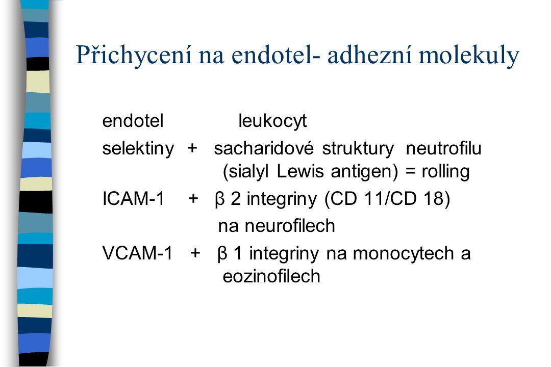 Přichycení na endotel- adhezní molekuly