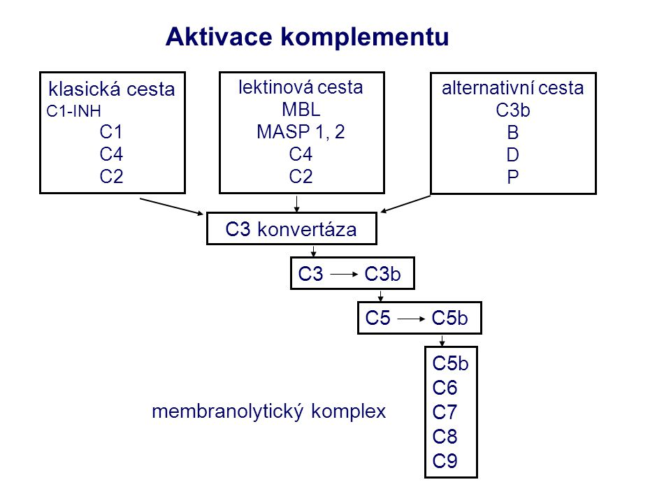 Aktivace komplementu klasická cesta C3 konvertáza C3 C3b C5 C5b C5b C6