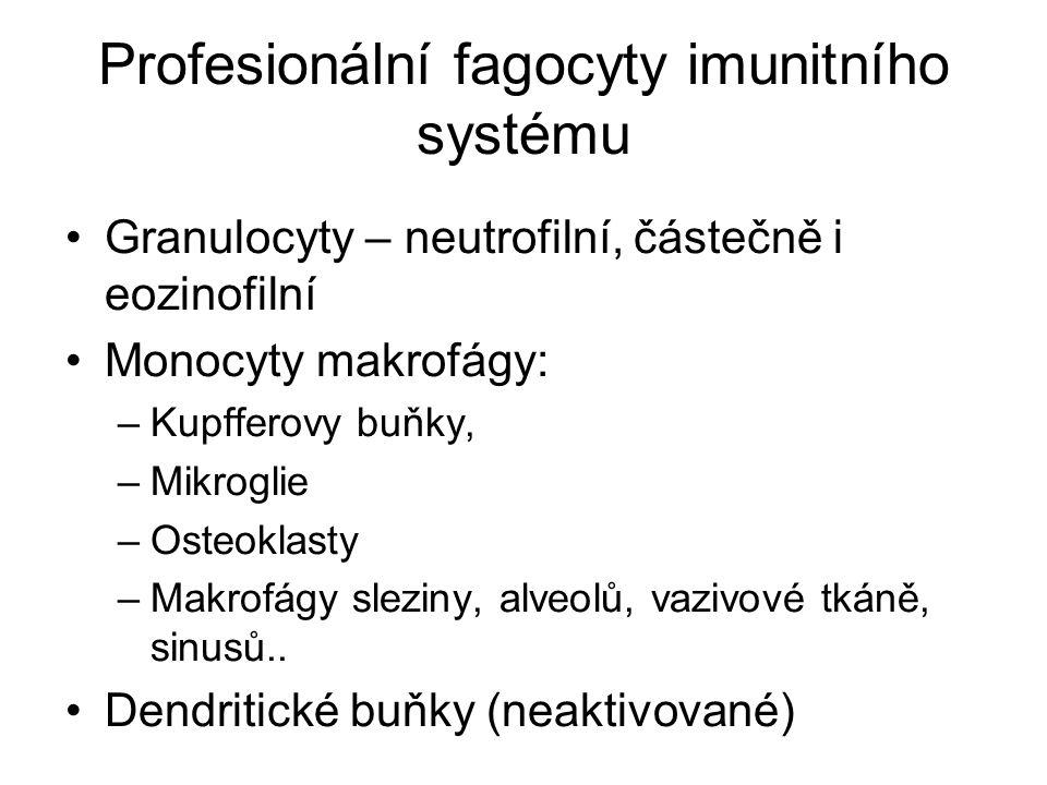 Profesionální fagocyty imunitního systému