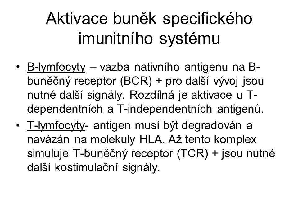 Aktivace buněk specifického imunitního systému