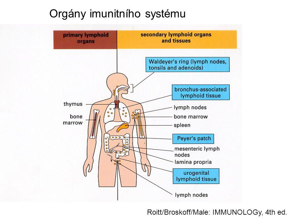 Orgány imunitního systému