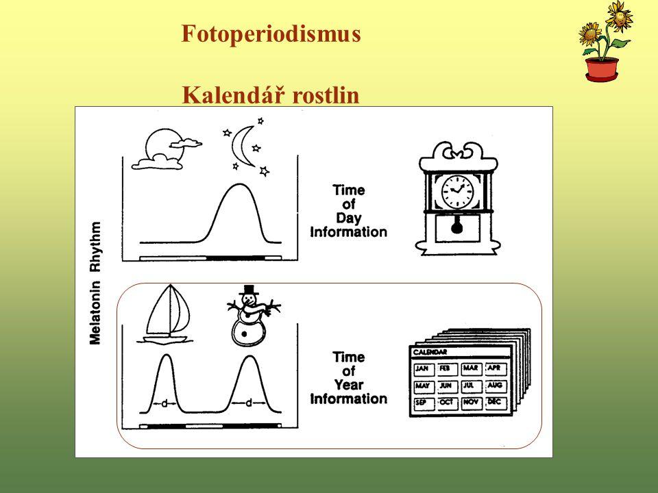 Fotoperiodismus Kalendář rostlin