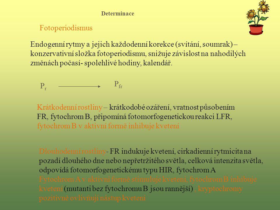 Determinace Fotoperiodismus.