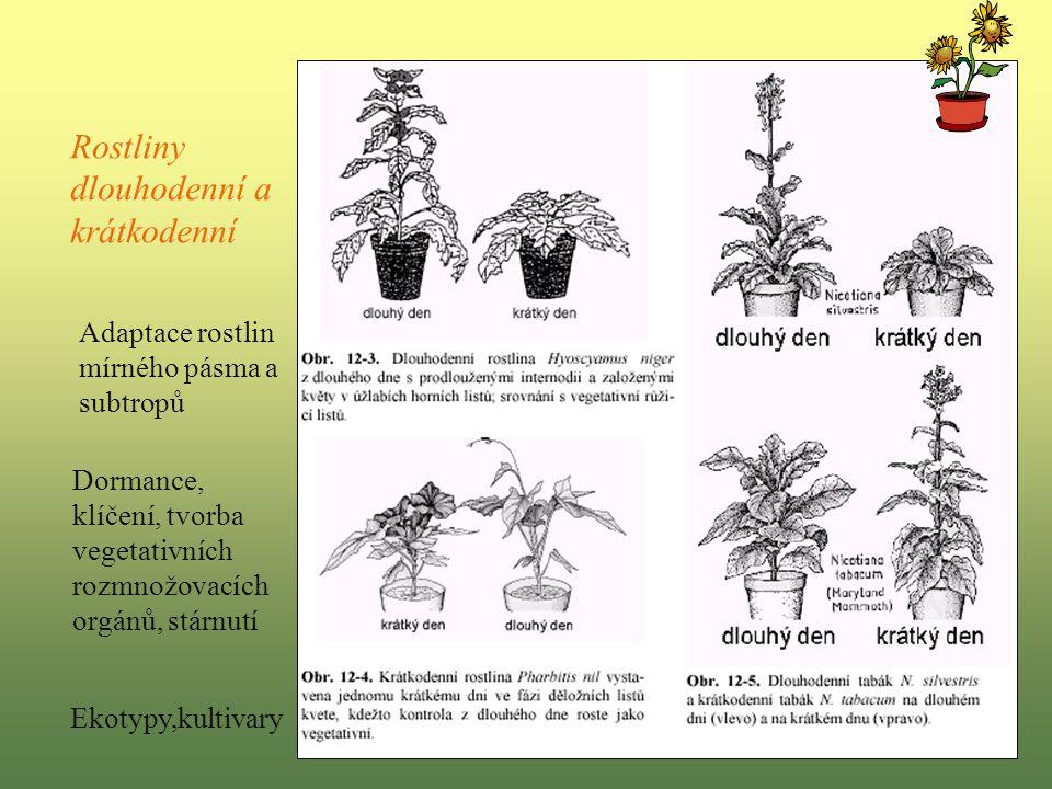 Rostliny dlouhodenní a krátkodenní