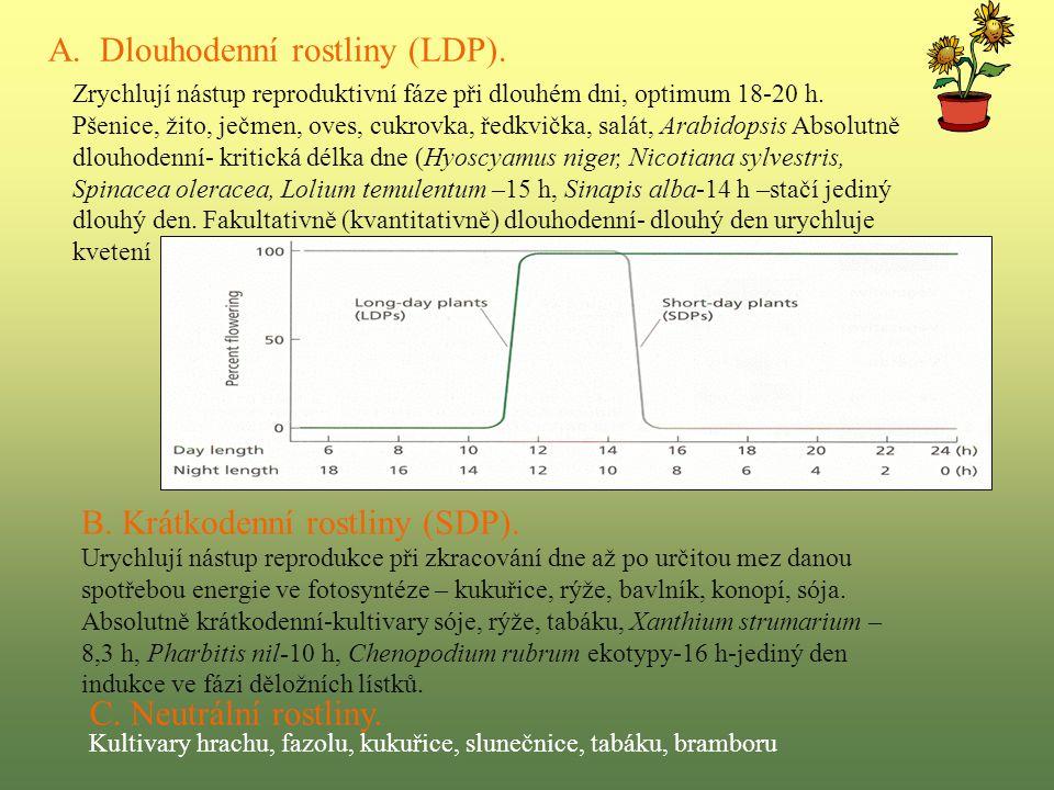 A. Dlouhodenní rostliny (LDP).