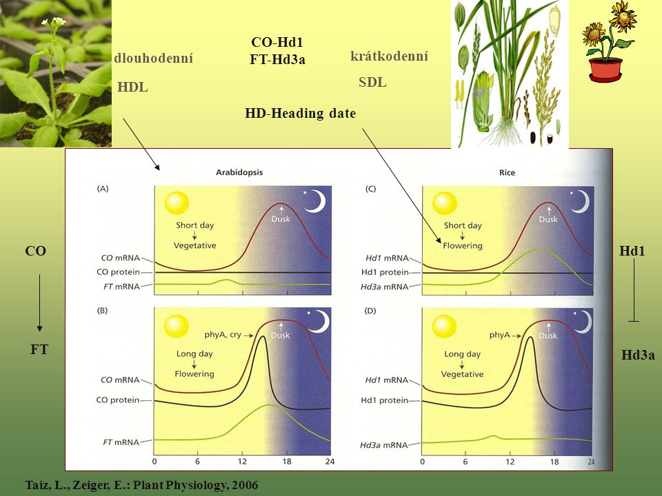 Taiz, L., Zeiger, E.: Plant Physiology, 2006