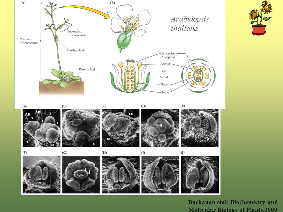 plant biochemistry and molecular biology pdf