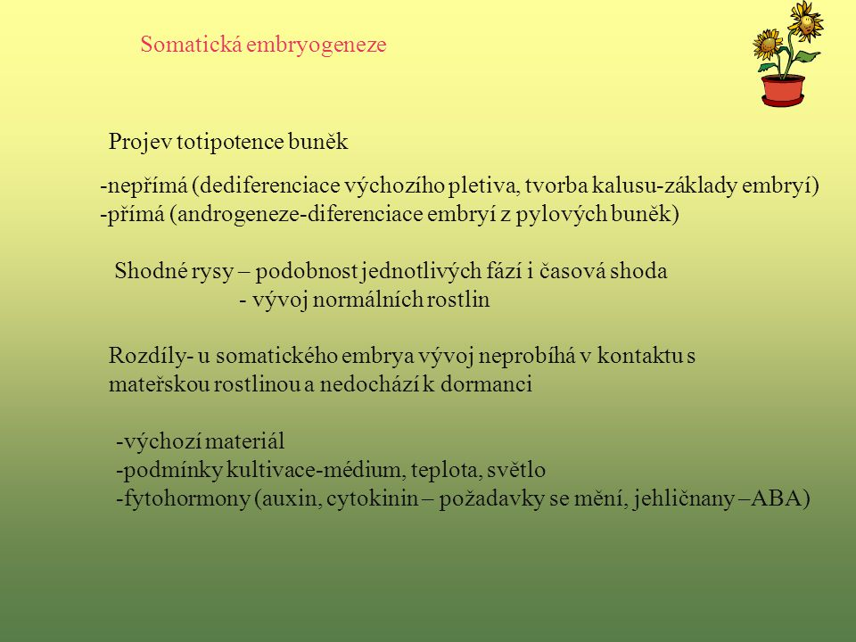 Somatická embryogeneze