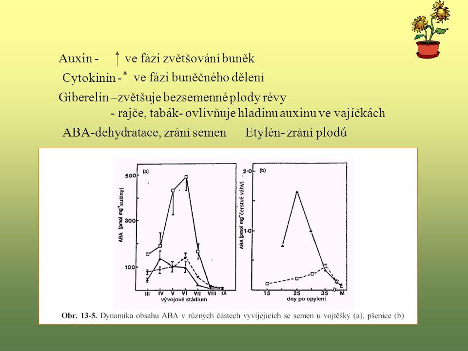 Auxin - ve fázi zvětšování buněk. Cytokinin - ve fázi buněčného dělení. Giberelin –zvětšuje bezsemenné plody révy.