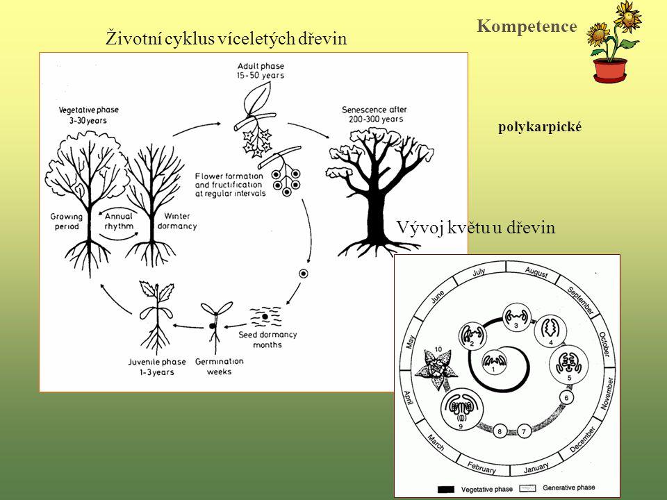 Životní cyklus víceletých dřevin