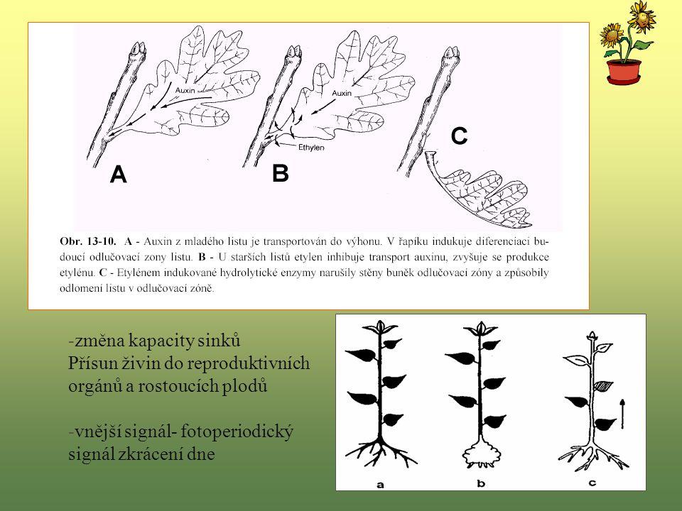 -změna kapacity sinků Přísun živin do reproduktivních orgánů a rostoucích plodů.