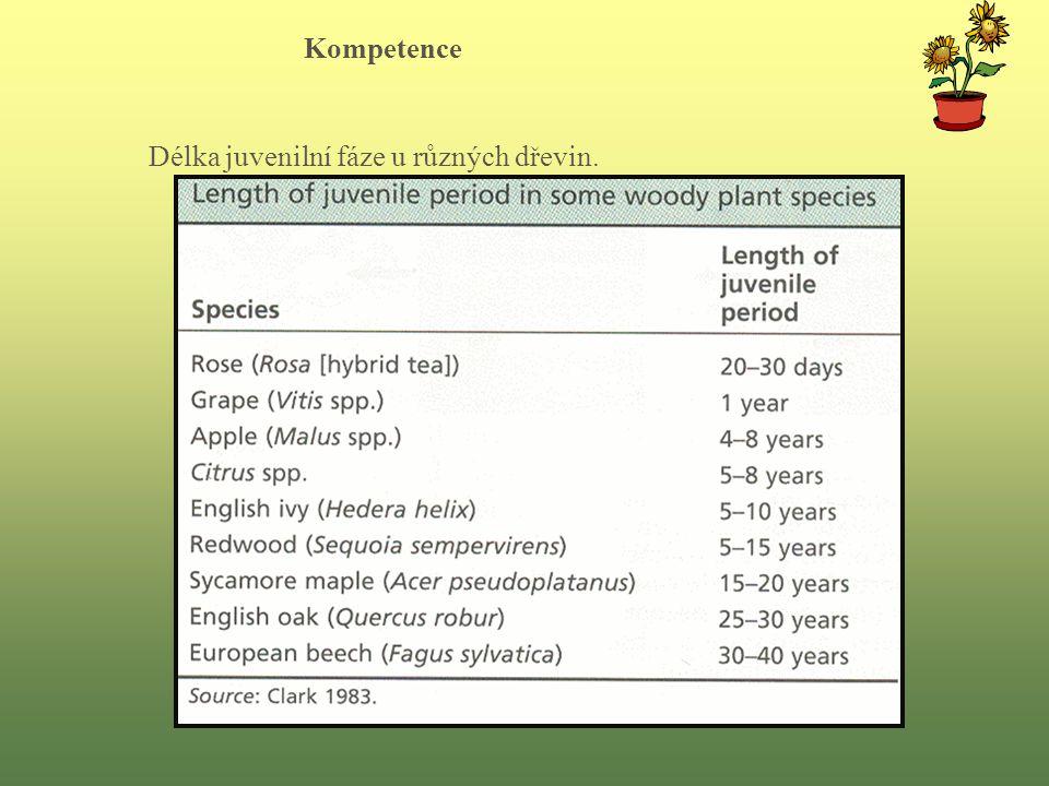 Kompetence Délka juvenilní fáze u různých dřevin.