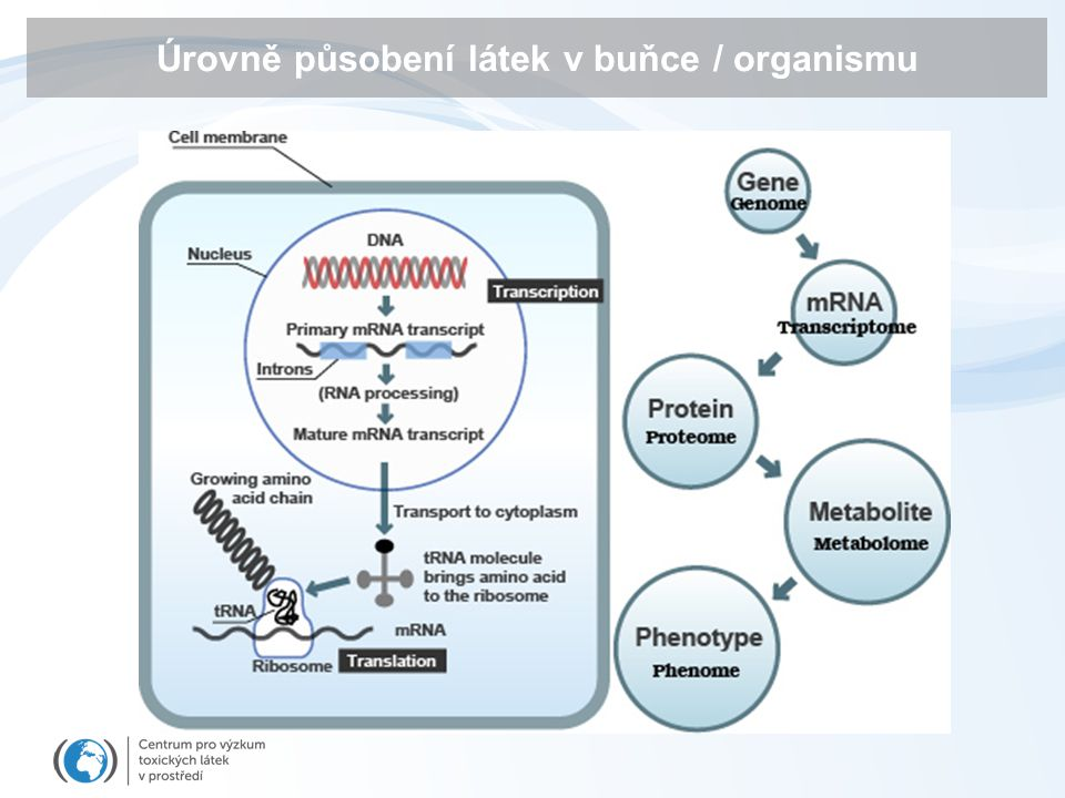 Úrovně působení látek v buňce / organismu
