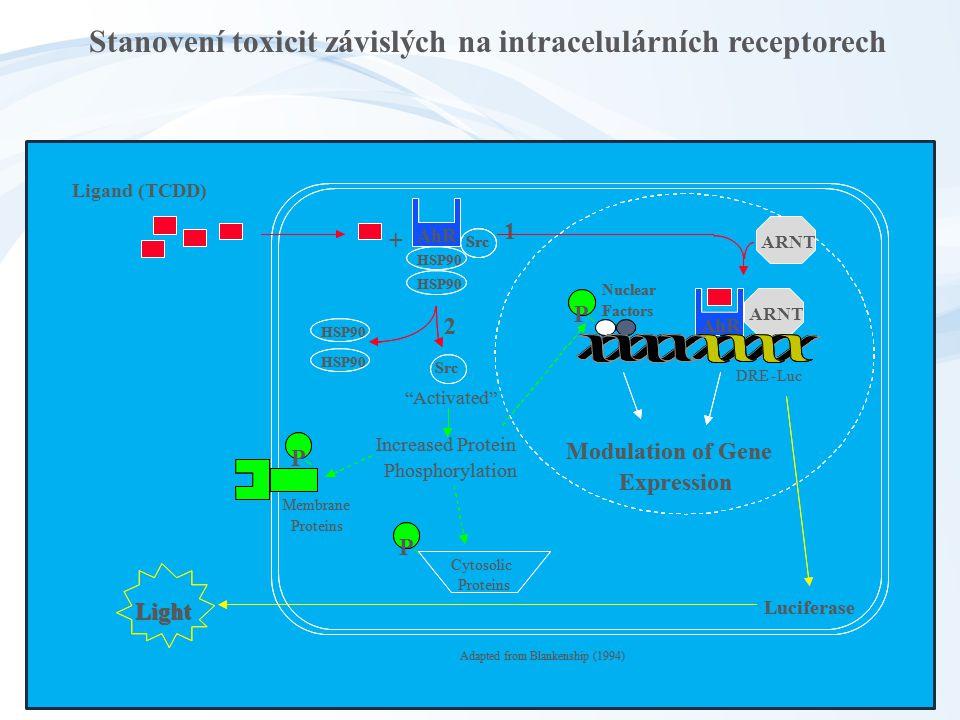 Stanovení toxicit závislých na intracelulárních receptorech