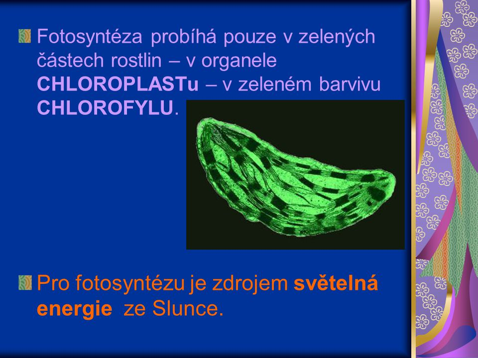 Pro fotosyntézu je zdrojem světelná energie ze Slunce.