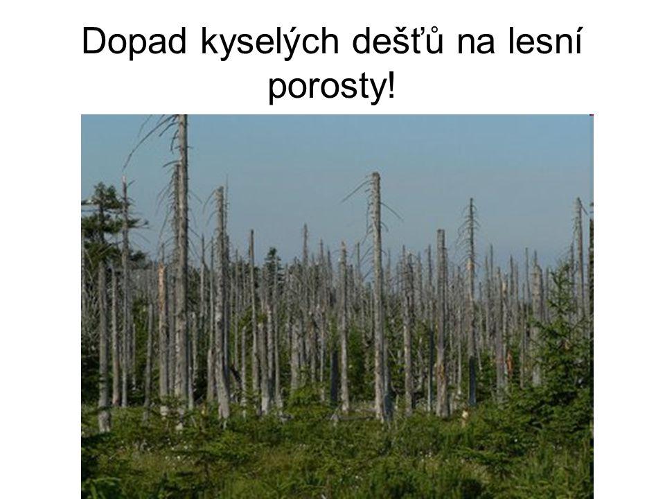 Dopad kyselých dešťů na lesní porosty!