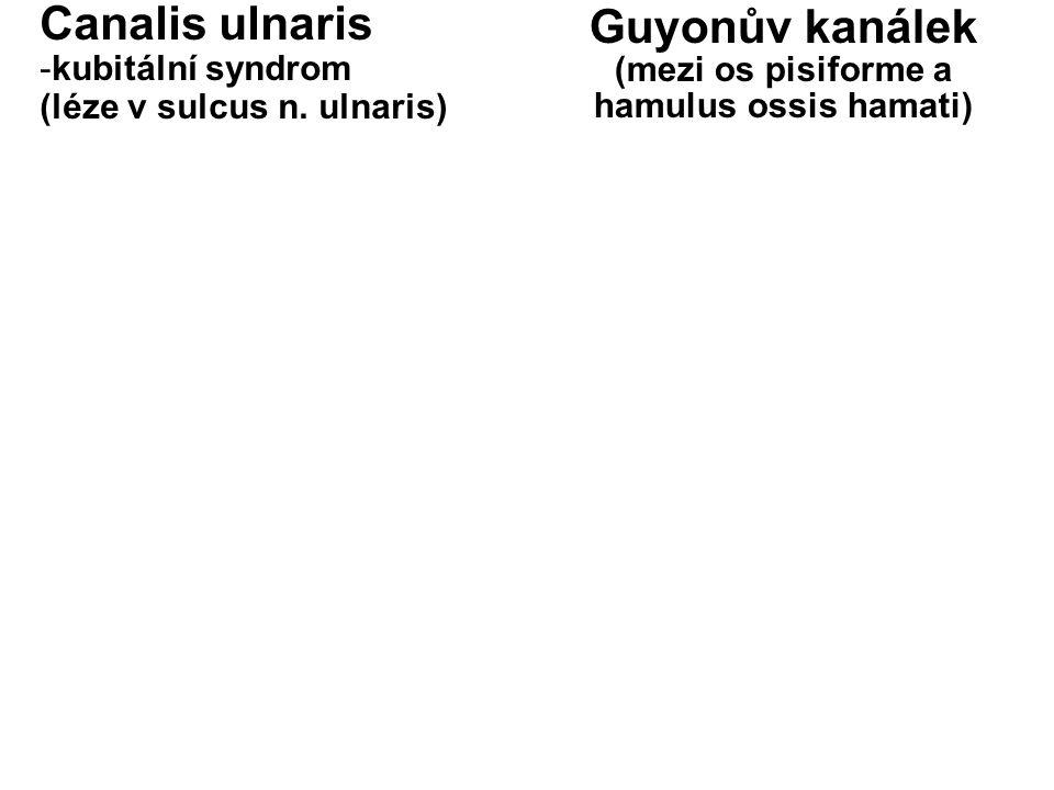 (mezi os pisiforme a hamulus ossis hamati)